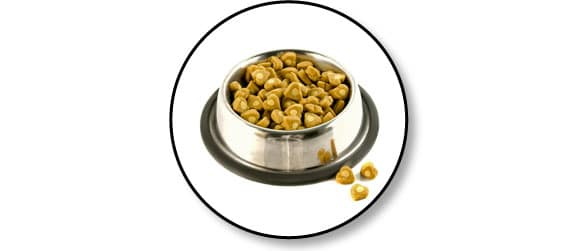 alimentation-chien-chat