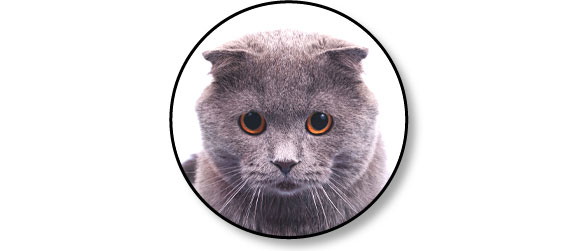 anxiete_comportement_chat
