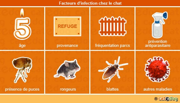 facteurs_infection_chat