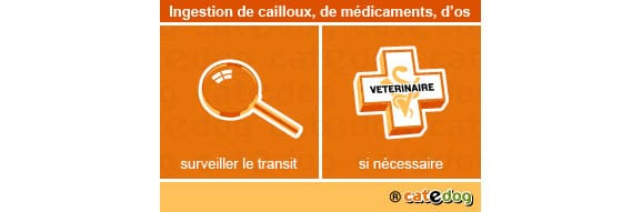 ingestion_cailloux_chat