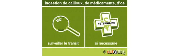 ingestion_cailloux_chien