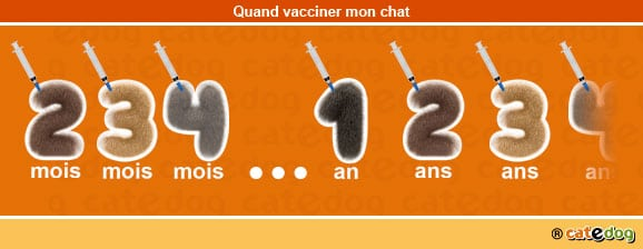 quand-vacciner-vaccination-rappel-chat