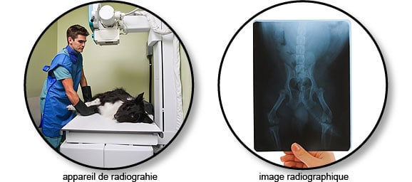 radiographie_chien_chat