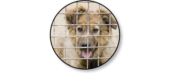 adoption-chien-refuge