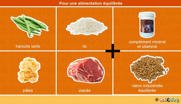 alimentation-equilibree-chaton