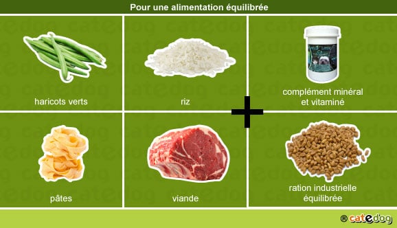 alimentation-equilibree-chien-adulte