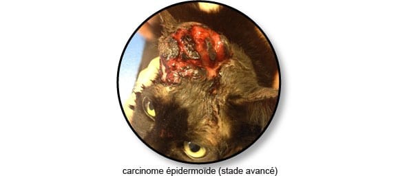 carcinome-epidermoide-chat_©catedog.com