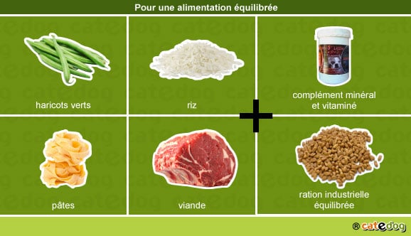alimentation-equilibree-chiot