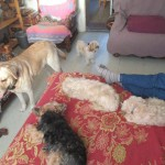 pension-canine-chiens-chats_catedog.com