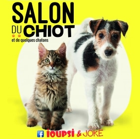 salon du chiot ioupsi joke de saint etienne conseils v t rinaires illustr s catedog. Black Bedroom Furniture Sets. Home Design Ideas