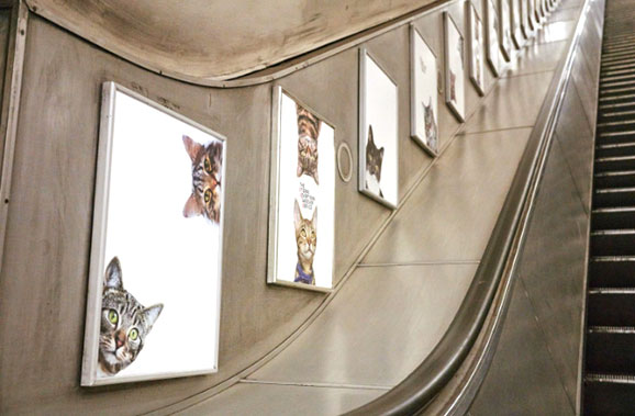 affiches_chats_metro_londres_2