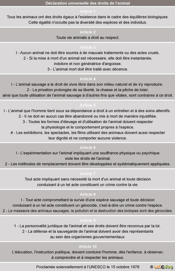 declaration-universelle-droits-animal_chien-chat_2