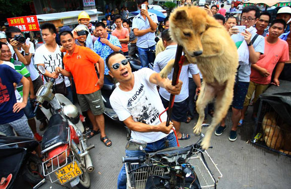 massacre-yulin-festival-chine-chien