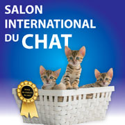 salon international du chat de chartres conseils