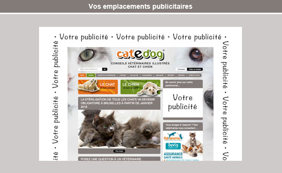 emplacement-campagne-publicitaire-catedog