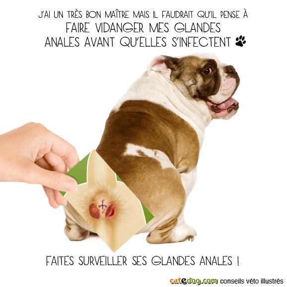 vider-purger-glandes-anales-chien