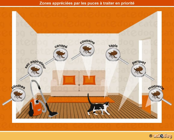 maladies de peau transmissibles l homme chat conseils v t rinaires illustr s catedog. Black Bedroom Furniture Sets. Home Design Ideas