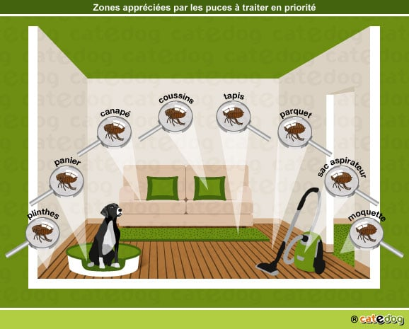 puces chez le chien conseils v t rinaires illustr s catedog. Black Bedroom Furniture Sets. Home Design Ideas