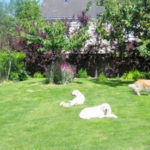 golden-retriever-jahttp://catedog.com/wp-content/uploads/2018/07/golden-retriever-jardin.jpgrdin