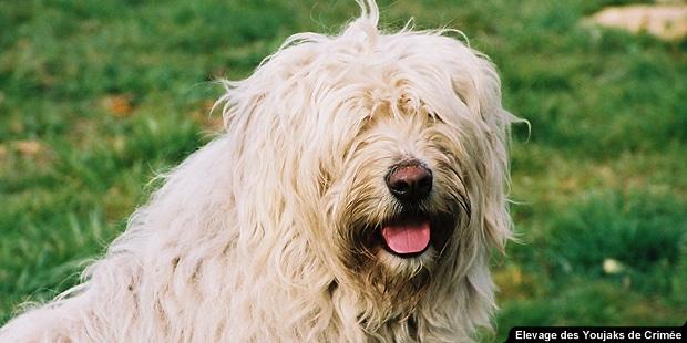 chien_Youjak_berger-de-russie-meridionale_portrait_nature