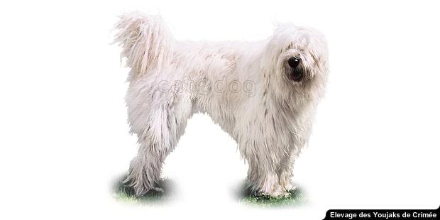 chien_Youjak_berger-de-russie-meridionale