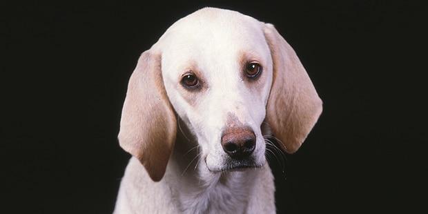 chien-billy-portrait