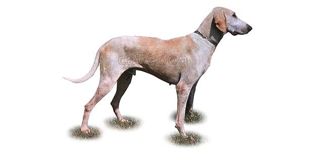 chien-billy