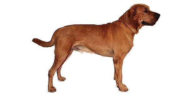 chien-broholmer