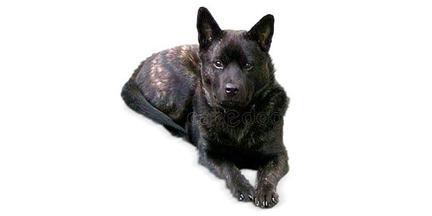 chien-kai-tora-inu-kai-toraken