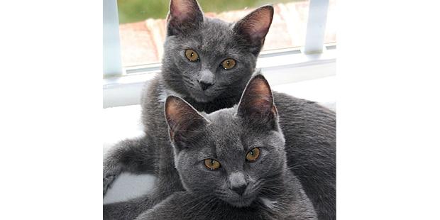 korat-si-sawat-couple