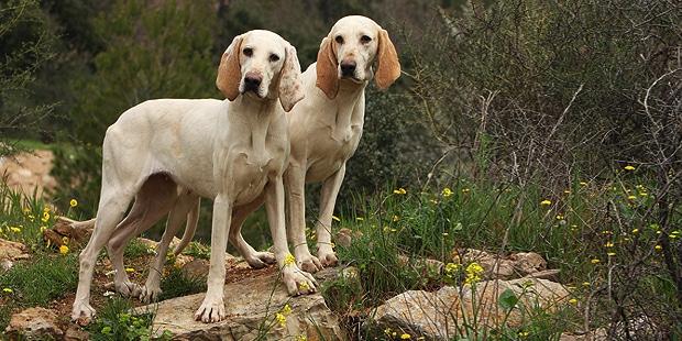porcelaine-chien-de-franche-comte-exterieur
