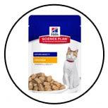alimentation-nourrir-chat-sans-dent-hills
