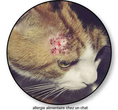 Allergie alimentaire chez le chat