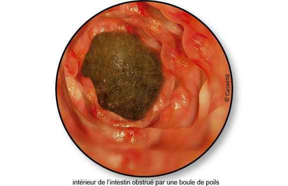 boule-poils-occlusion-intestinale-chat