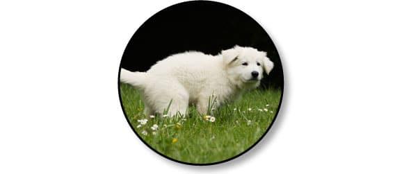 diarrhees_digestion_chien