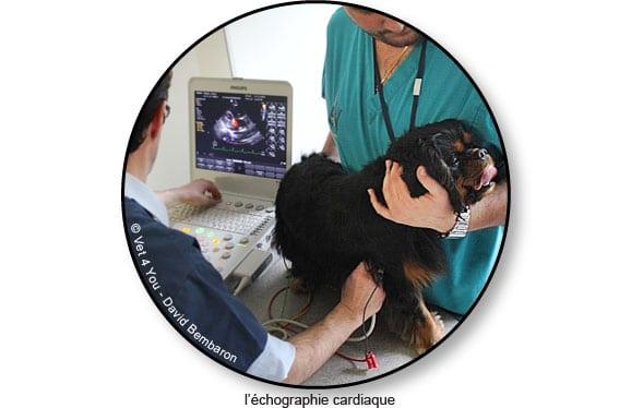 echographie-cardiaque-chien-vet4you