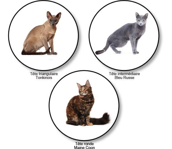 forme-de-la-tete-chats