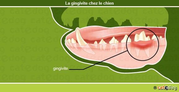 gingivite_dent_chien