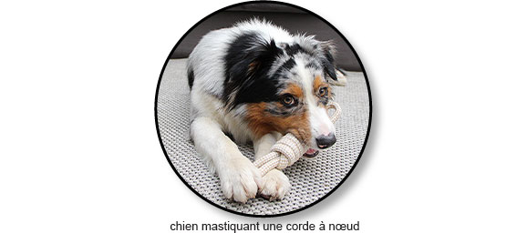 jouet corde à nœud pour le chien