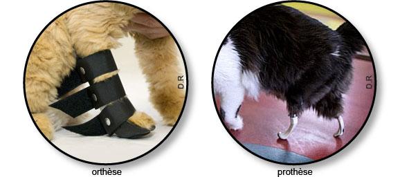 Orthèse et prothèse chez le chat souffrant d'arthrose