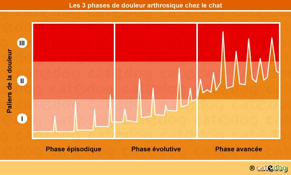 palier-phase-douleur-arthrose-chat