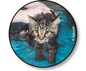 Physiothérapie et hydrothérapie chez le chat souffrant d'athrose