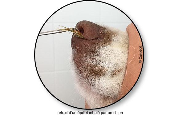 pince-epillet-inhale-nez-narine-chien