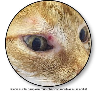 Plaie dans la paupière de l'œil d'un chat