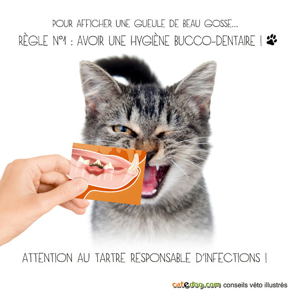 tartre-detartrer-detartrage-dents-chat