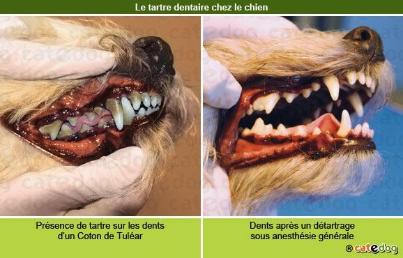 tartre_dentaire_chien
