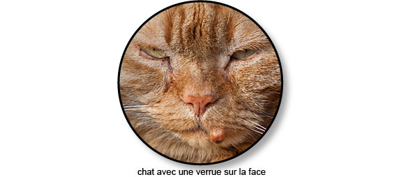 verrue_peau_chat