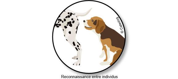 vider-glandes-anales-chien