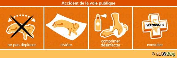 accident-voie_publique_chat