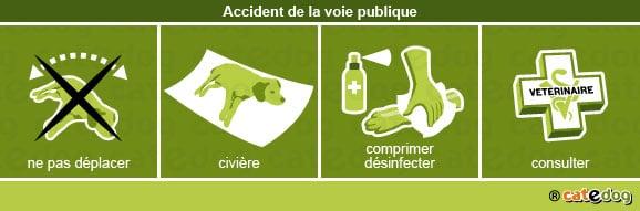 accident_voie_publique_chien